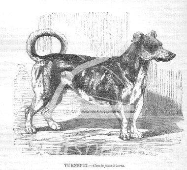 ZS163: Vernepator Cur - der Hund im Hamsterrad