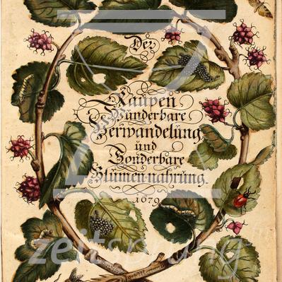 ZS179: Maria Sibylla Merian – Naturforscherin und Künstlerin