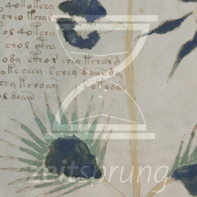 ZS222: Das Voynich-Manuskript