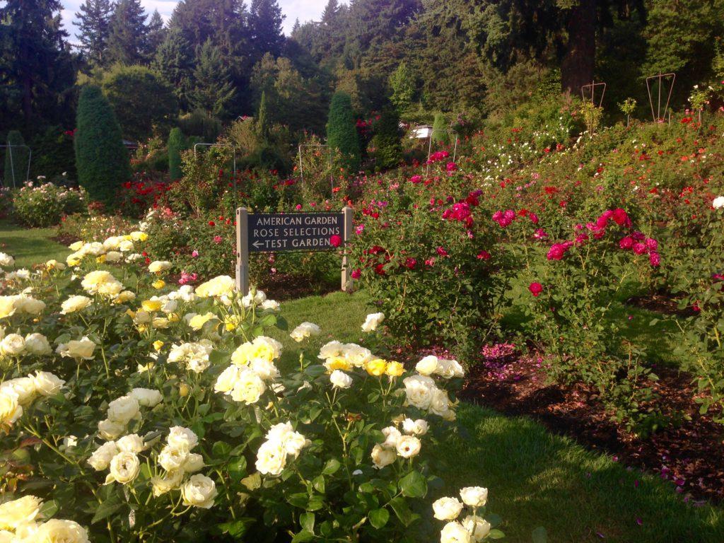 Rosengarten in Portland