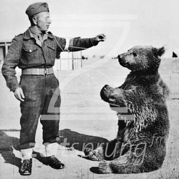 ZS215: Wojtek, polnischer Soldatenbär