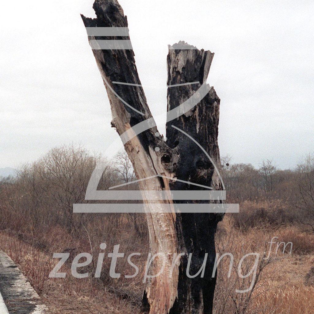ZS245: Operation Paul Bunyan
